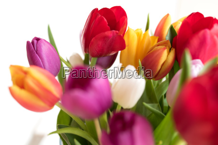 colorful tulips for mothers day