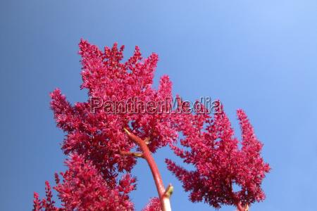 blue detail colour bloom blossom flourish
