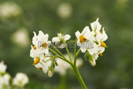 bloom blossom flourish flourishing agriculture useful