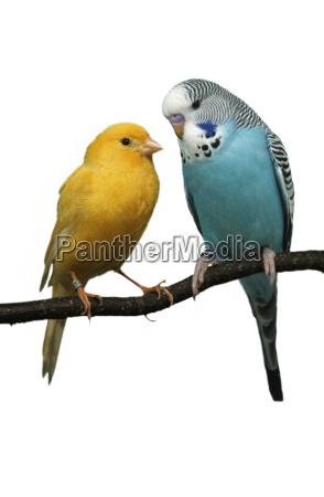 azul objeto liberado animal mascotas pajaro