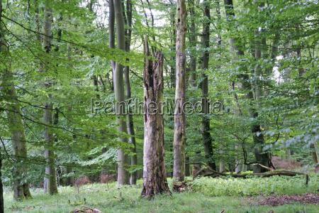 hoja arbol arboles madera cueva tronco