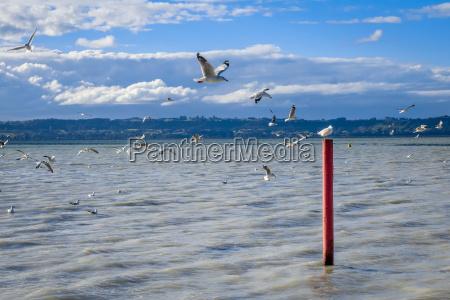 seagull on red stake rotorua lake