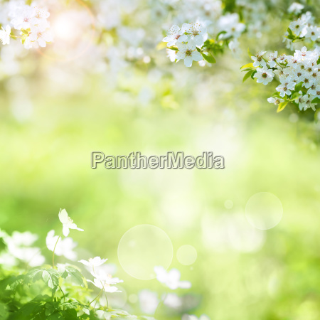 paisaje primaveral con flores de cerezo