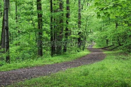 un camino escenico y vacio