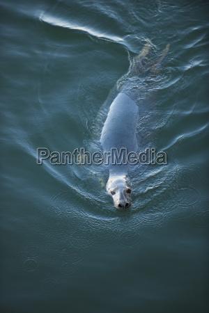primer plano deporte deportes aguas animal