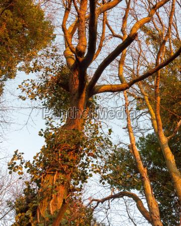 sunlight sunset dark branches golden light