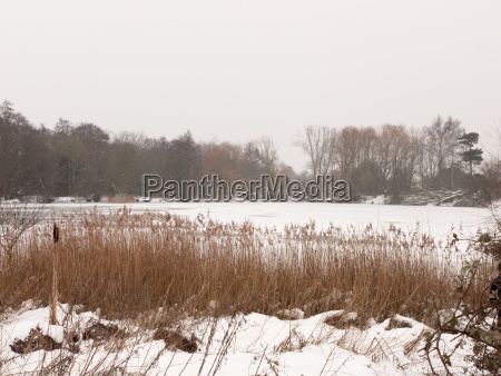 frozen over lake outside winter nature