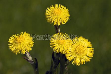 flor planta las maravillosas flores flowerage