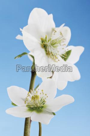 detalle primer plano flor planta las
