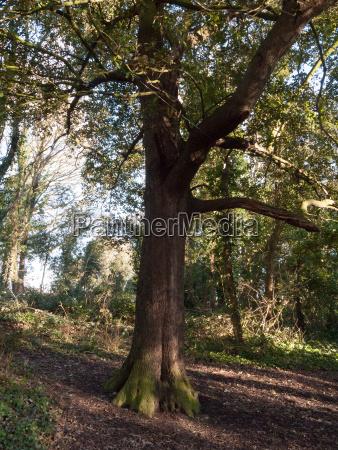 tree inside uk forest woodland sunshine