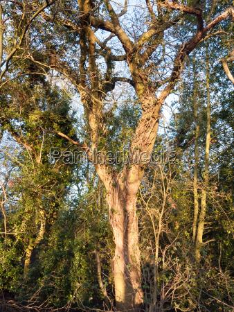golden bright sun on tree bark