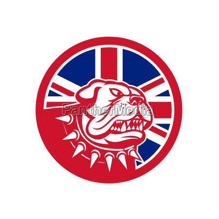 britanico buldog icono