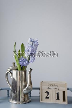 decoracion de flores en enero jacinto