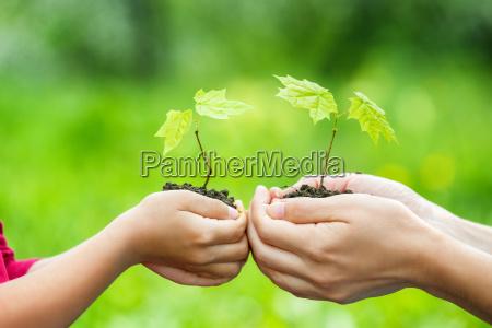 adulto y ninyo sosteniendo pequenya planta