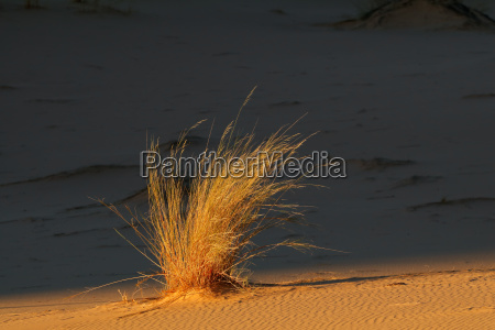 desierto sudafrica duna las plantas del