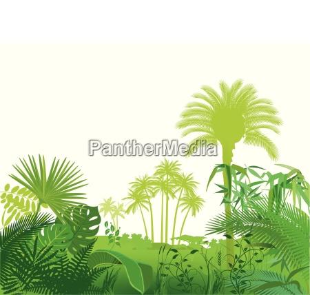 ilustracion de plantas tropicales exoticas