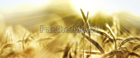 engraved nourishes sun nature banner