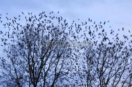 animal pajaro los animales monumentos aves