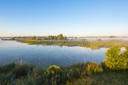 rural arbol arboles niebla verano veraniego
