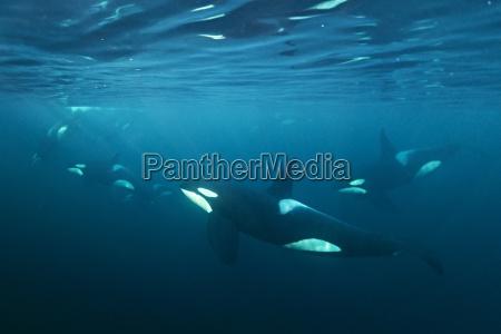 mamifero monumentos europa vista noruega submarino