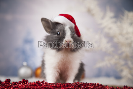 little bunnyfunny rabbit on christmas background