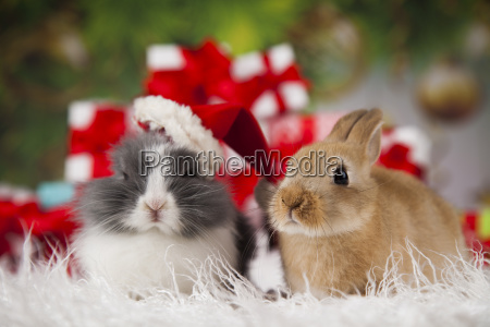 bunny with rabbit christmas red santa