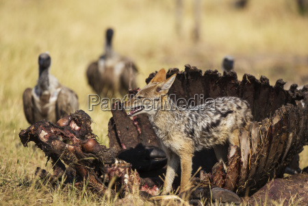 personas gente hombre muerte animal mamifero