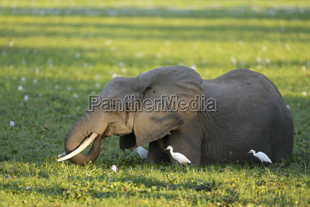 pajaro parque nacional africa monumentos aves