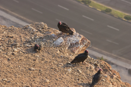 desierto pajaro los animales aves horizontalmente