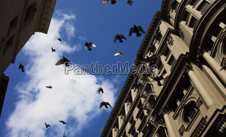 las palomas despegadas de repente de