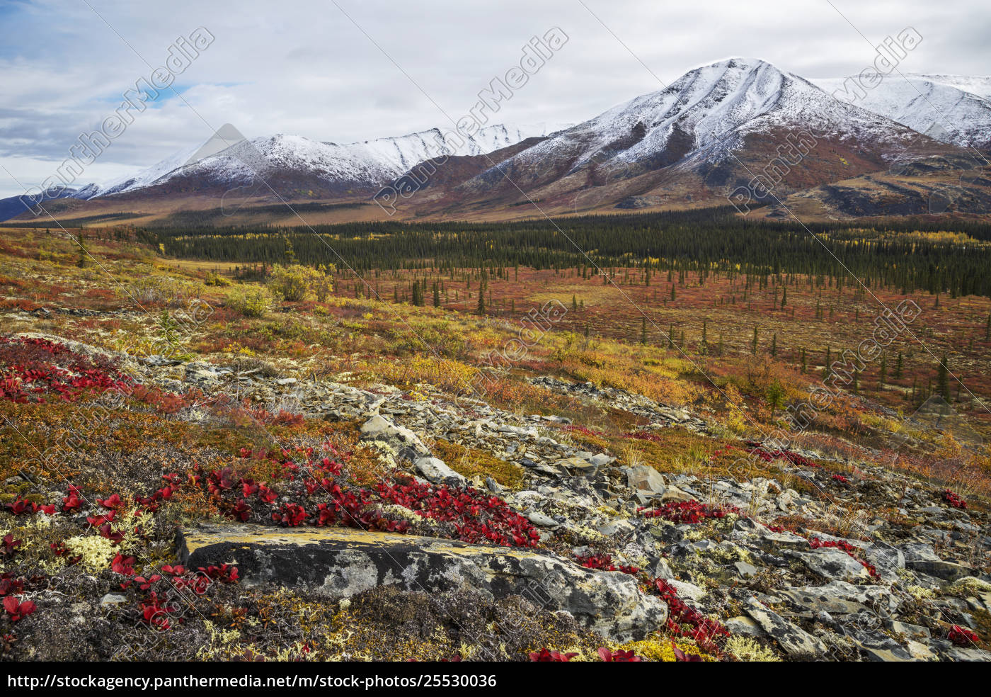 the, landscape, along, the, dempster, highway - 25530036