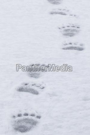 ir paseo viaje color invierno oso