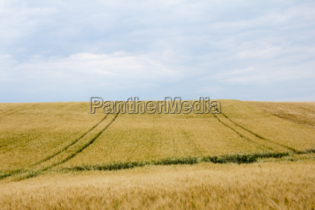 cornfields con carriles y horizonte en