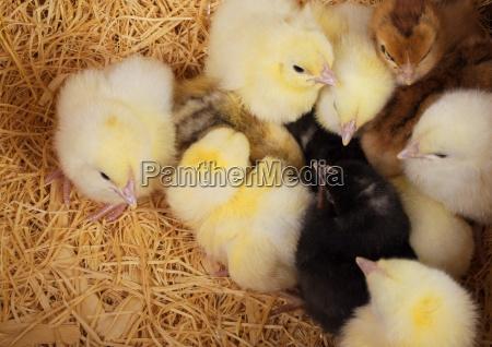 animal pajaro los animales aves horizontalmente