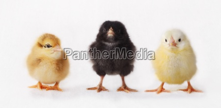 interior animal pajaro los animales aves