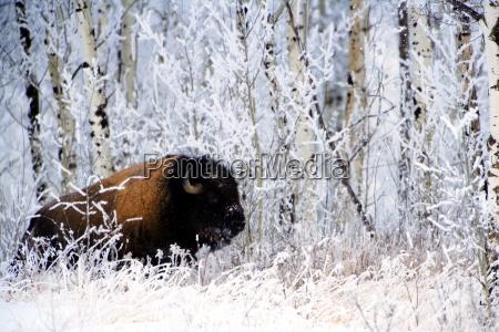 invierno animal mamifero salvaje los animales