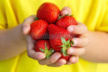 fresas frutas bayas fresa fruta baya