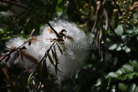 nido huevo huevos bolas capullo telaranya