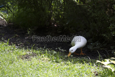animal pajaro primavera fauna ecologia ornitologia