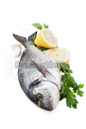 fresh fish on white