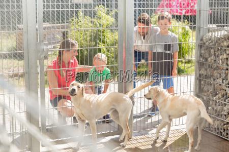 familia llegar a conocer perros en