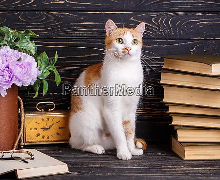 cat near open book with glasses