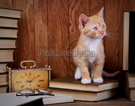 cat on books near the clock