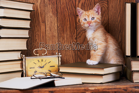 cat on book near the clock