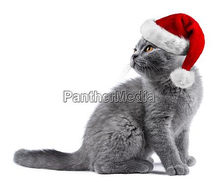 gatito con el sombrero de santa