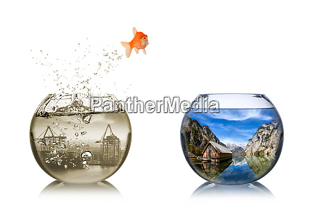 concepto de replanteamiento de peces