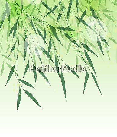 hoja verde de bambu