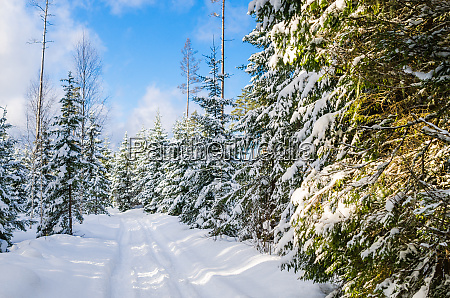 the road through the beautiful coniferous