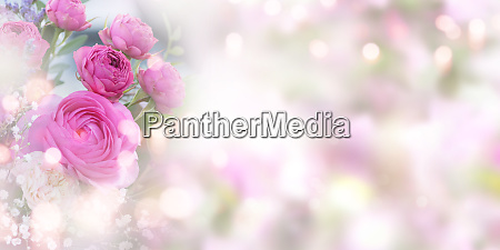 tender pink roses background