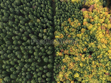 aerial view green treetops turning color
